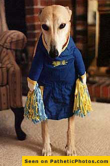 Animal carnival: dress your doggy, a visual carnage - cheer leader dog... PatheticPhotos.com